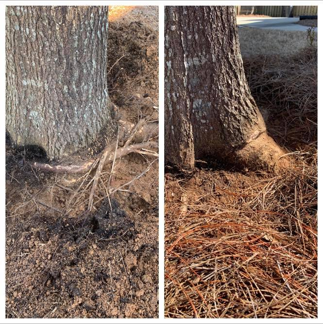 Are These Five Common Plant Diseases Lurking in Your Yard – An Arborist in Augusta can Help!